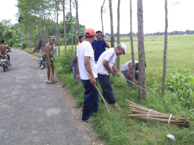 Penghijauan Pohon Jati Di Desa Kejambon